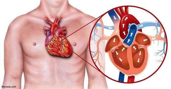 بهترین فوق تخصص قلب